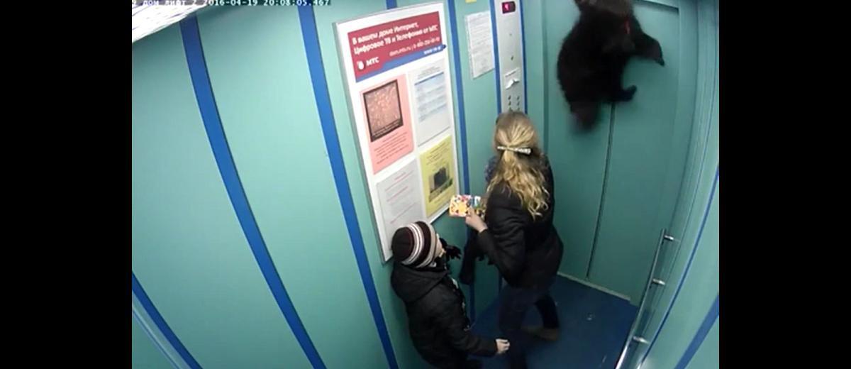 Is dit een hele foute grap of is het echt waar? Deze hond wordt bijna gewurgd doordat de riem vast komt te zitten tussen de liftdeuren.