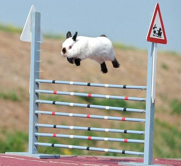 Able To Leap Tall Buildings In A Single Bound Rabbit Jumping