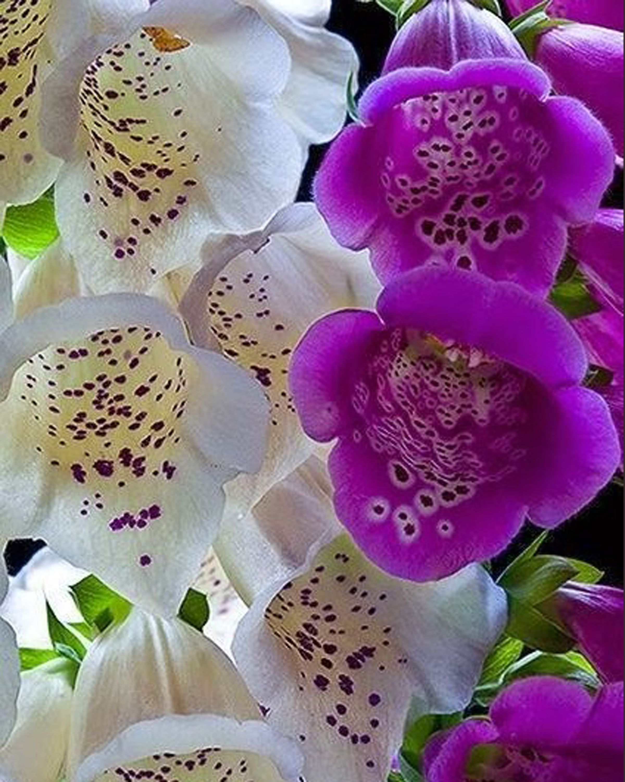 Pin by sandra d on flowers pinterest orchid and flowers