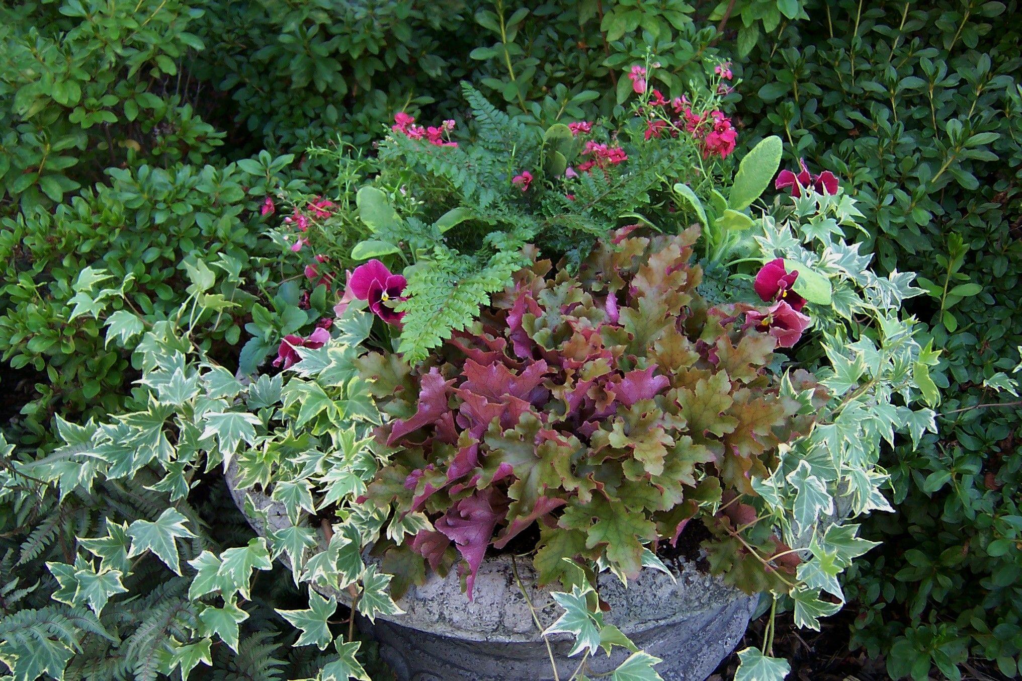 Queda Container Gardening