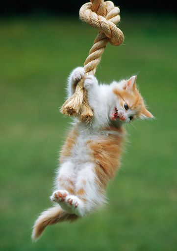 Image result for hang on rope animal