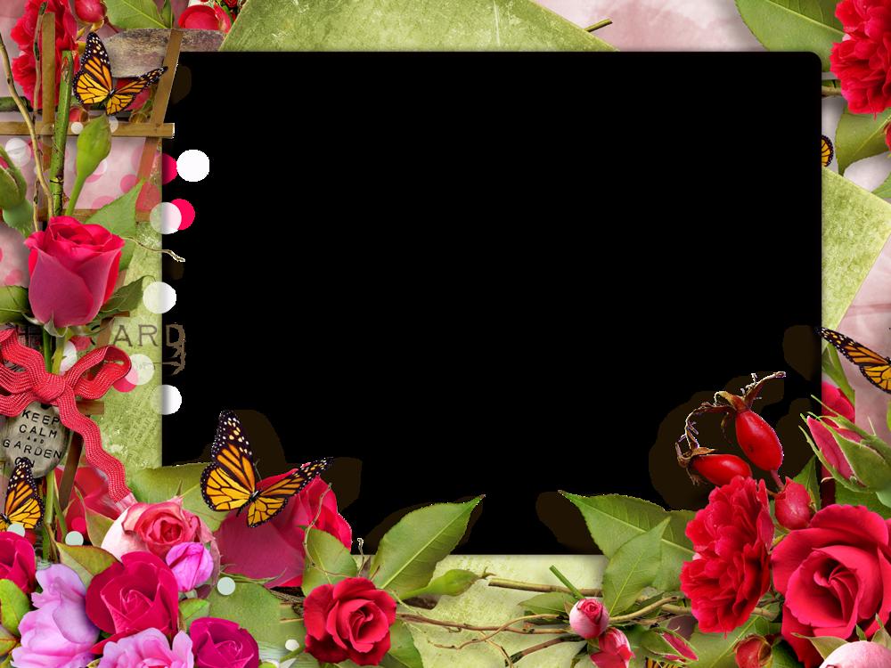 Фотошоп открытки розы, начало своими