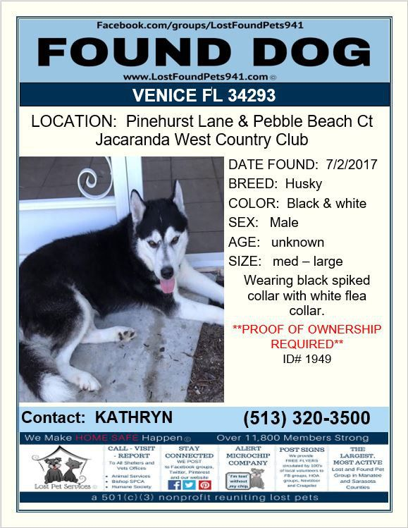 Do You Know Me Found Husky Missing Pets Lost Dog Venice Fl