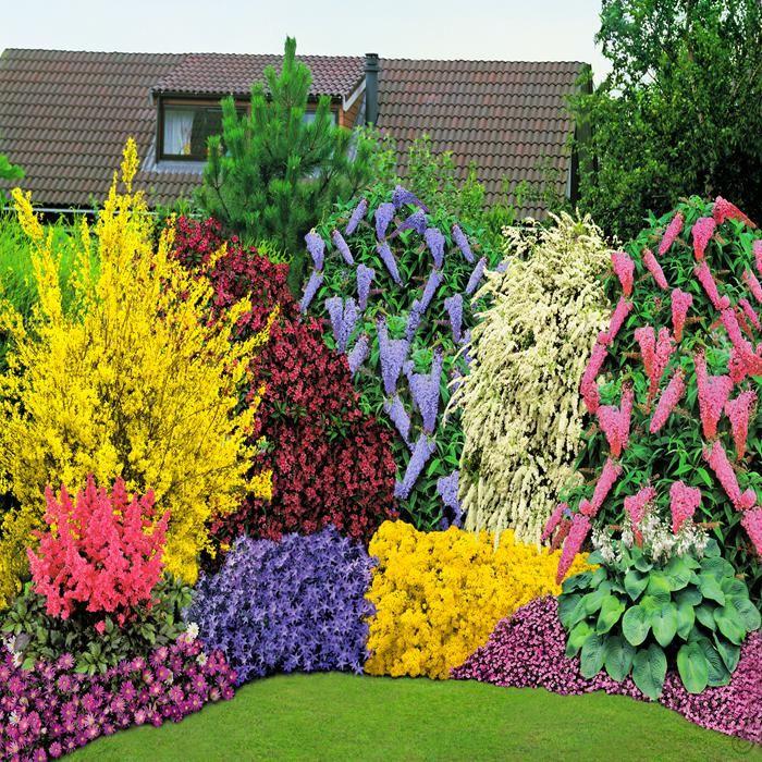 Spring Flowers And Yard Landscaping Ideas 20 Tulip Bed: 40 Vaste Planten Collectie Met 5 Heesters Kopen Veilig
