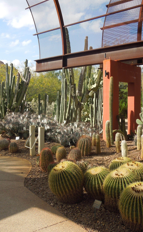 Desert Botanical Garden | Travel | Vacation Ideas | Road Trip ...