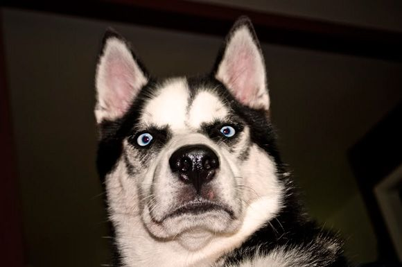 Funny dog face google suche cute animals pinterest happy funny dog face google suche voltagebd Image collections