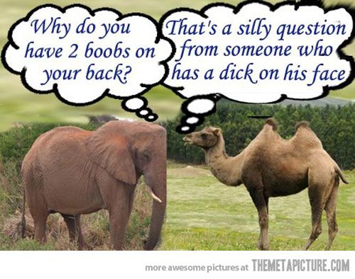 Silly Camel (@TheSillyCamel) | Twitter