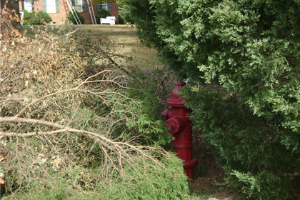 Example of a hidden fire hydrant behind trees and brush