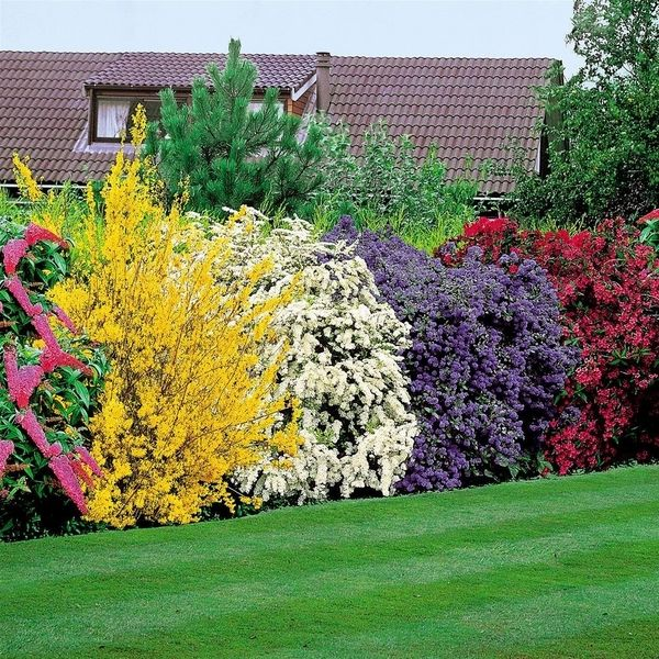 Privacy Plants A Living Fence For Your Outdoor Area Garten Hecken Garten Garten Bepflanzen