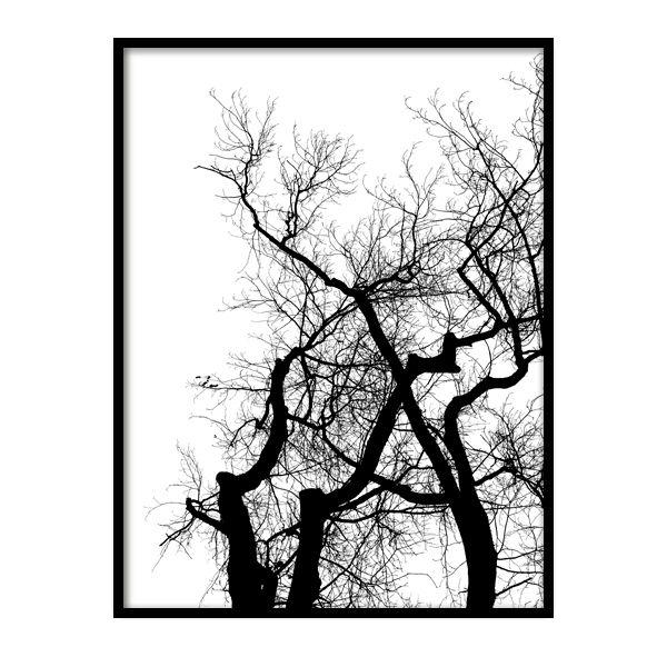 Oksisto on mustavalkoinen, kotimainen juliste. Mustat oksat puhtaan valkoisella taustalla luovat hienon kontrastin luontoaiheiseen julisteeseen ja upean yksityiskohdan seinälle. Juliste on painettu laadukkaalle mattapintaiselle, päällystämättömälle paperille. www.camala-store.fi