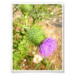 Desert Flower Photo  Desert Flower Photo  $0.55  by StoneOwlStudio  . More Designs http://bit.ly/2hyOutM #zazzle