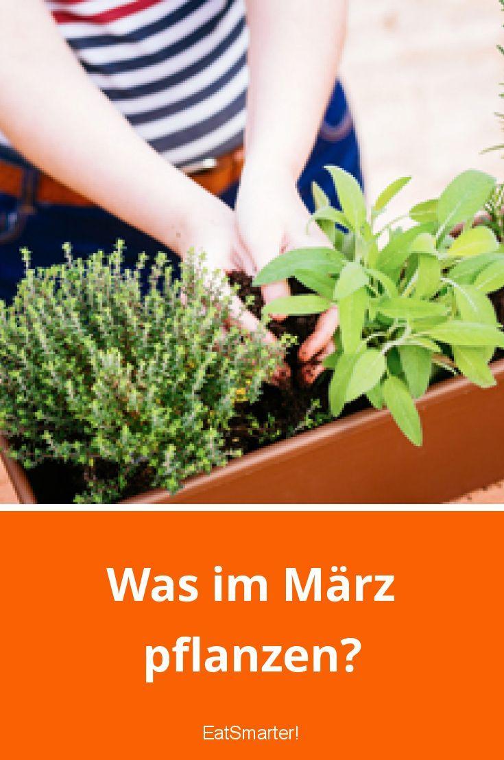 Was im März pflanzen? #herbsgarden