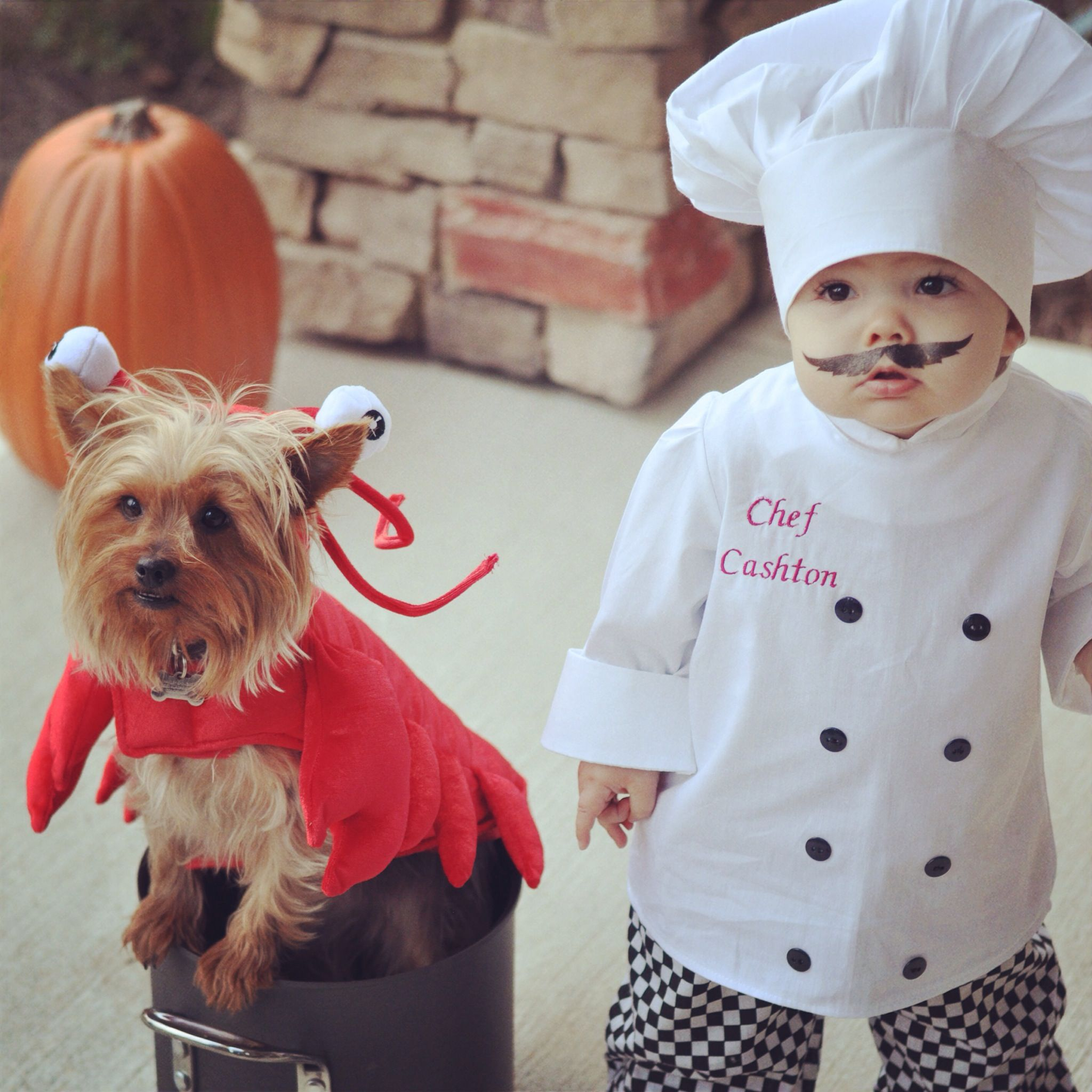 Chef toddler costume and lobster dog costume. Halloween 2014. Baby Chef by Jaime Spencer @ awelldressedlife.com