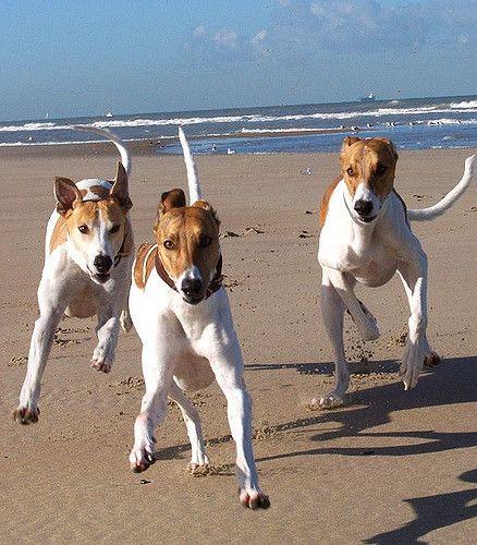 Mivan Fenyves Furfang Hunde