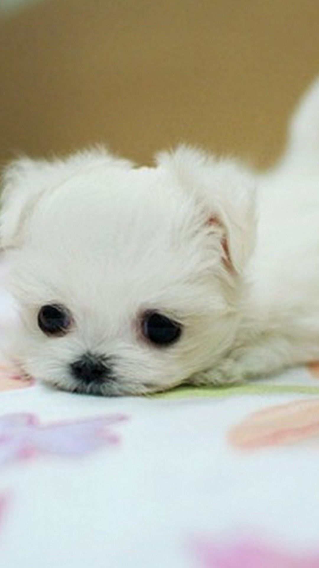 Puppies Hd Wallpapers For Mobile Puppies Cute Dogs Hd