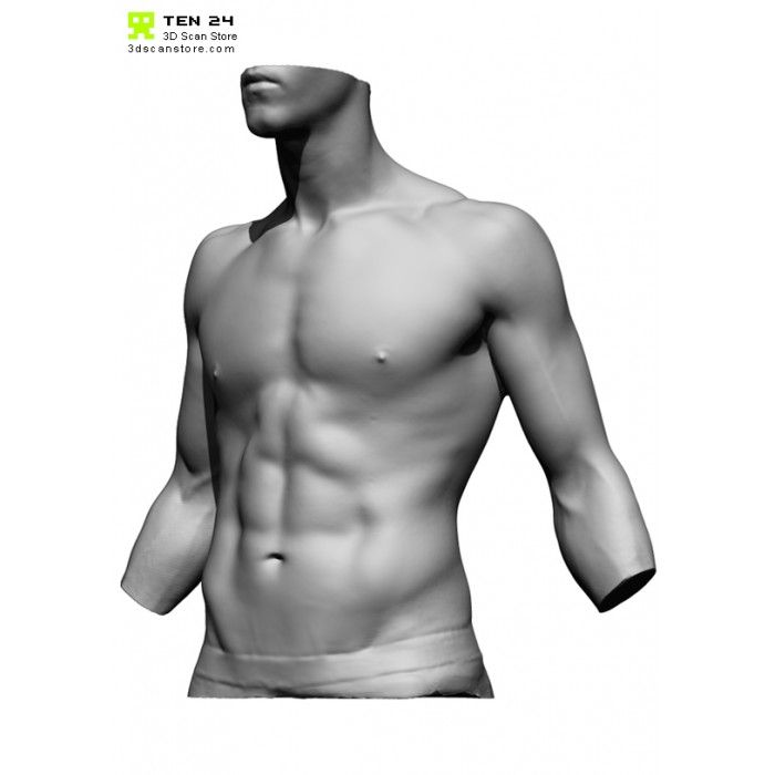 Male Torso Scan Bundle Male Torso Torso Human Anatomy
