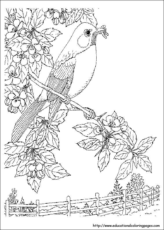 Nature Coloring Pages For Adults Free Printable Coloring