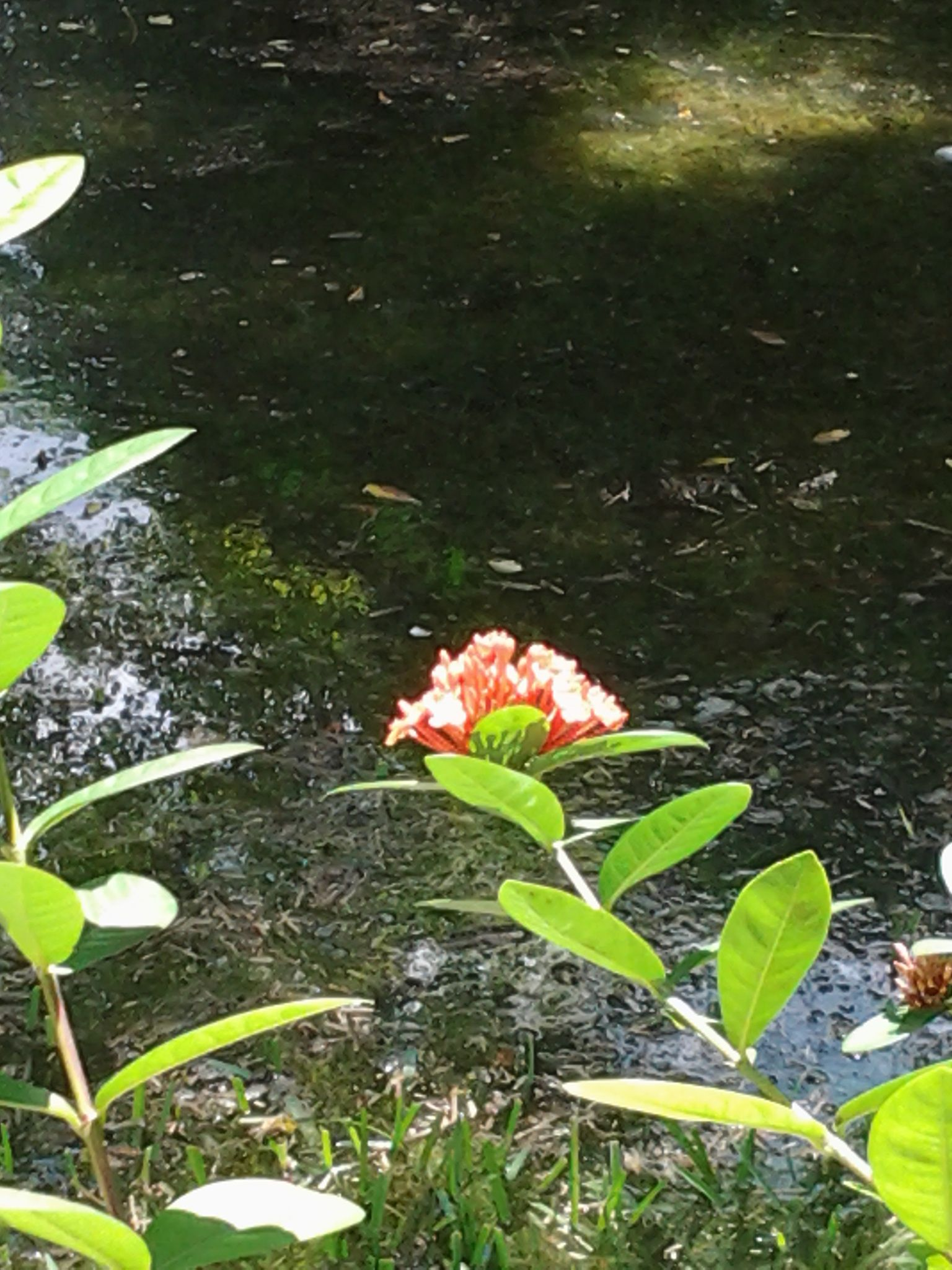 Its a really pretty  orange flower with water around it