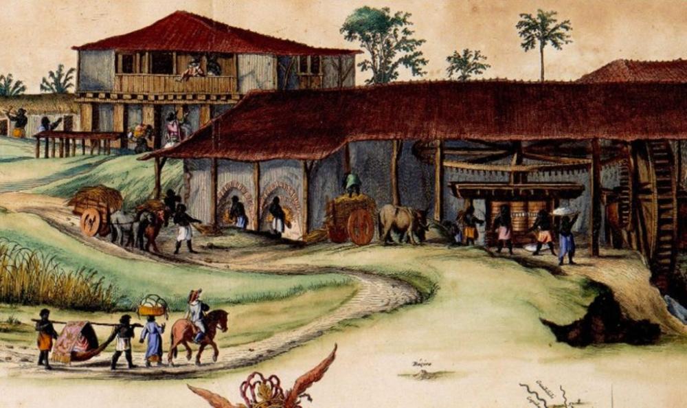 Você conhece a origem da cachaça? em 2020 Brasil colonia