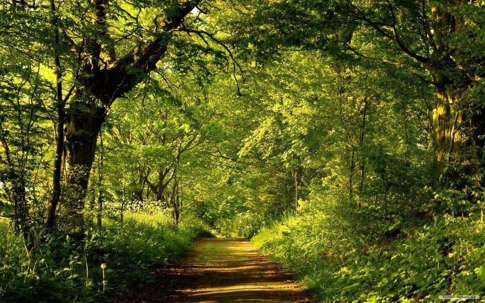 krajobraz, Przyroda wektor