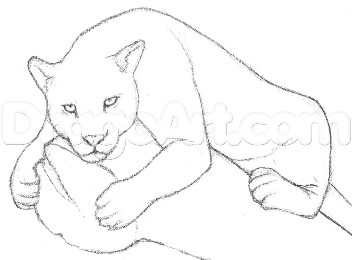 Draw A Jaguar Step By Step Drawing Sheets Added By
