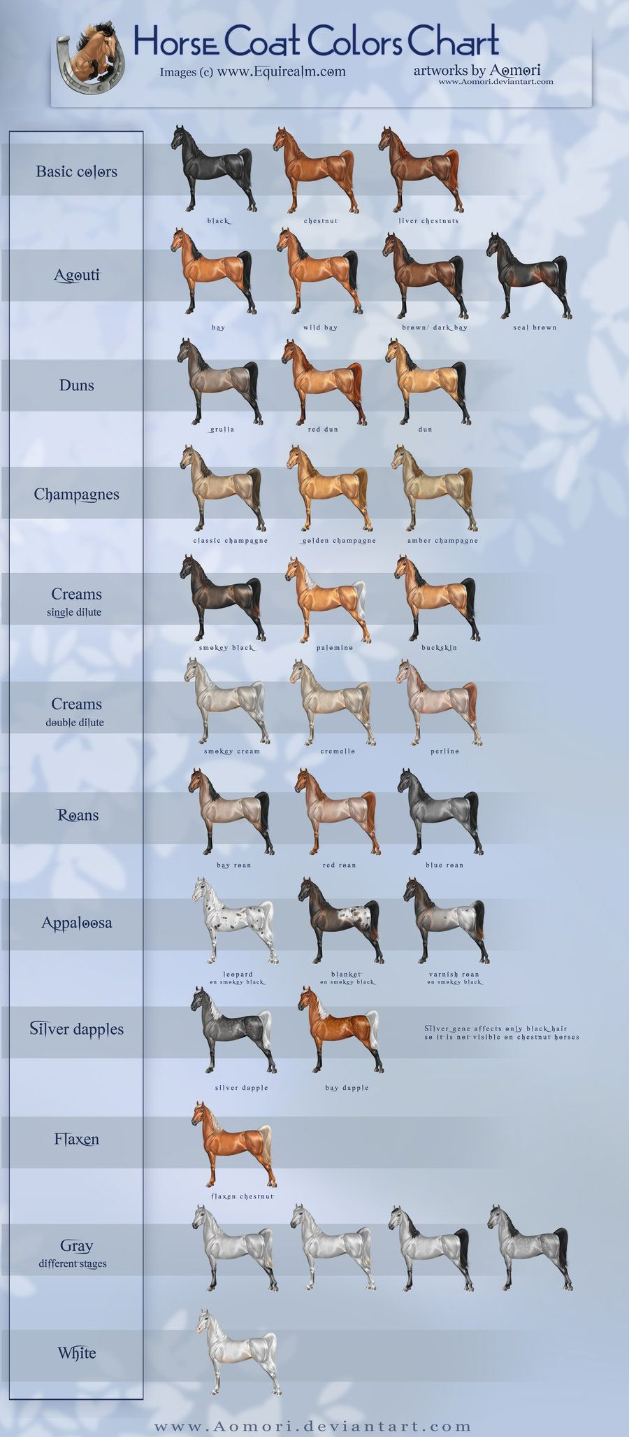 Equine coat color horse coat colors chart by aomori on equine coat color horse coat colors chart by aomori on deviantart nvjuhfo Choice Image