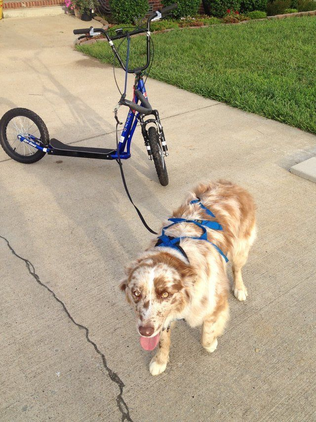 Diggler Dog Scooter Urban Mushing Bike In Clarksville Dog