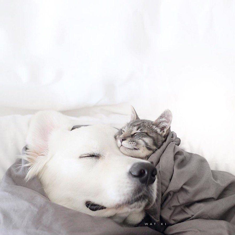 """Photo of Los perros Watson y Kiko son los mejores amigos del gato Harry """"Como perro y …"""