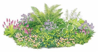 Pre Planned Perennial Gardens And Borders Preplanned Garden Plans Plants