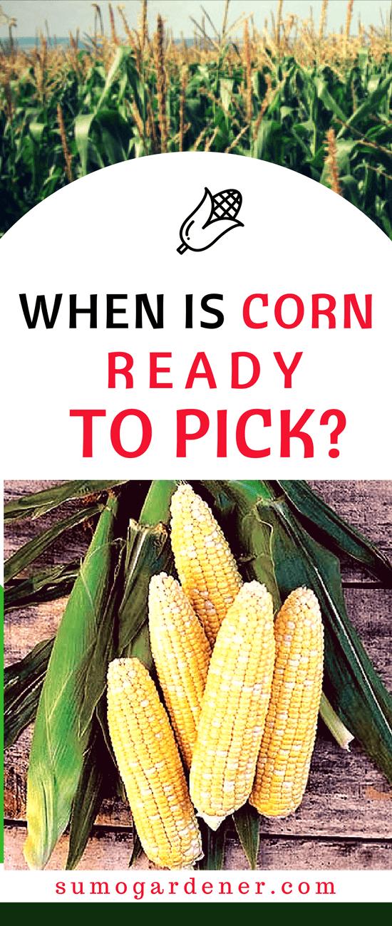 When Is Corn Ready To Pick Organic Gardening Tips Organic Vegetable Garden Organic Vegetables
