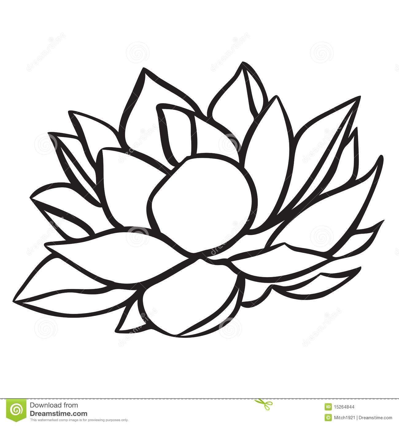 Lotus Drawing Black And White Viewing Gallery Lotus