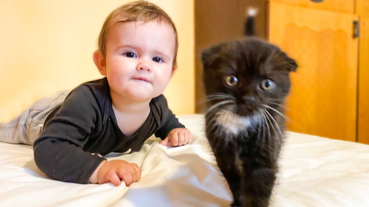 Baby Zlata Meets Kitten For The Very First Time Cuteness Overload Youtube In 2020 Cuteness Overload Cute Baby Names Kitten