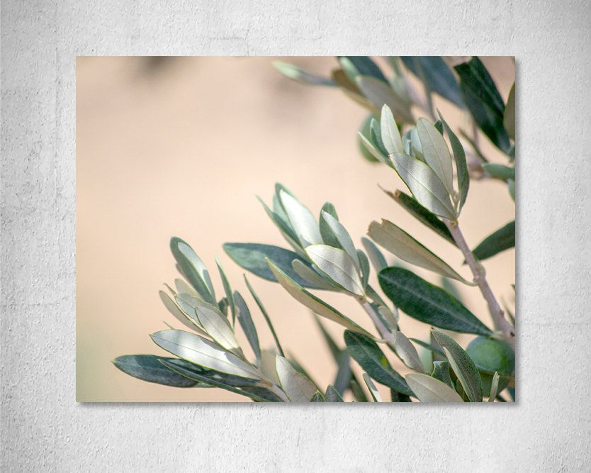 Leaves photography Olive tree Photo print Nature photography Greece print Minimal Romantic art print  Pink decor Pastel Green Grey Wall art by LightBluePhotography on Etsy