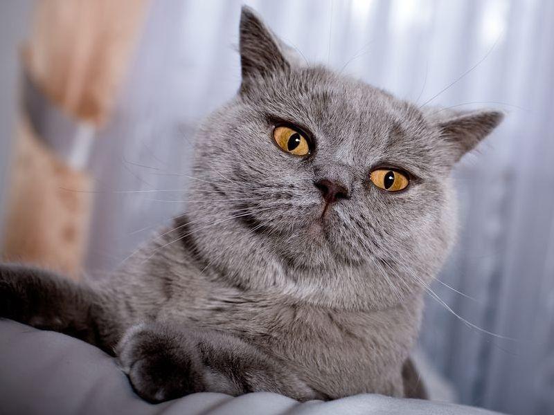 Die Schonsten Katzenrassen Der Welt Die Qual Der Wahl Katzen Katzen Rassen Katzenrassen