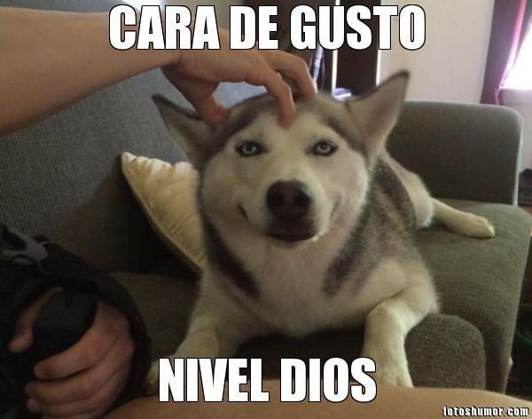 Husky Frases: Fotos Graciosas De Perros