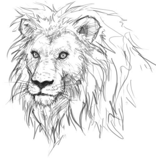 Digital painting and drawing video tutorials and step by step how to draw lion