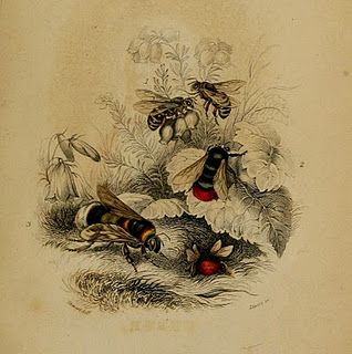 ≗ The Bee's Reverie ≗  Vintage bee print
