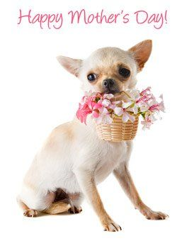 Mother S Day Printable Cards From Your Pet Pet360 Pet Parenting Simplified Chihuahua Pets Happy Mothers Day