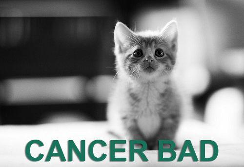 Cancer sucks pet cat