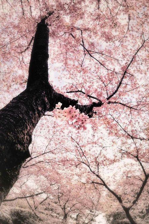 Some People Feel The Rain Others Just Get Wet Cherry Blossom Season Sakura Cherry Blossom Cherry Blossom