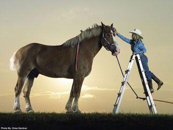 Tallest Living Horse Radar, a Belgian draught horse from Mount
