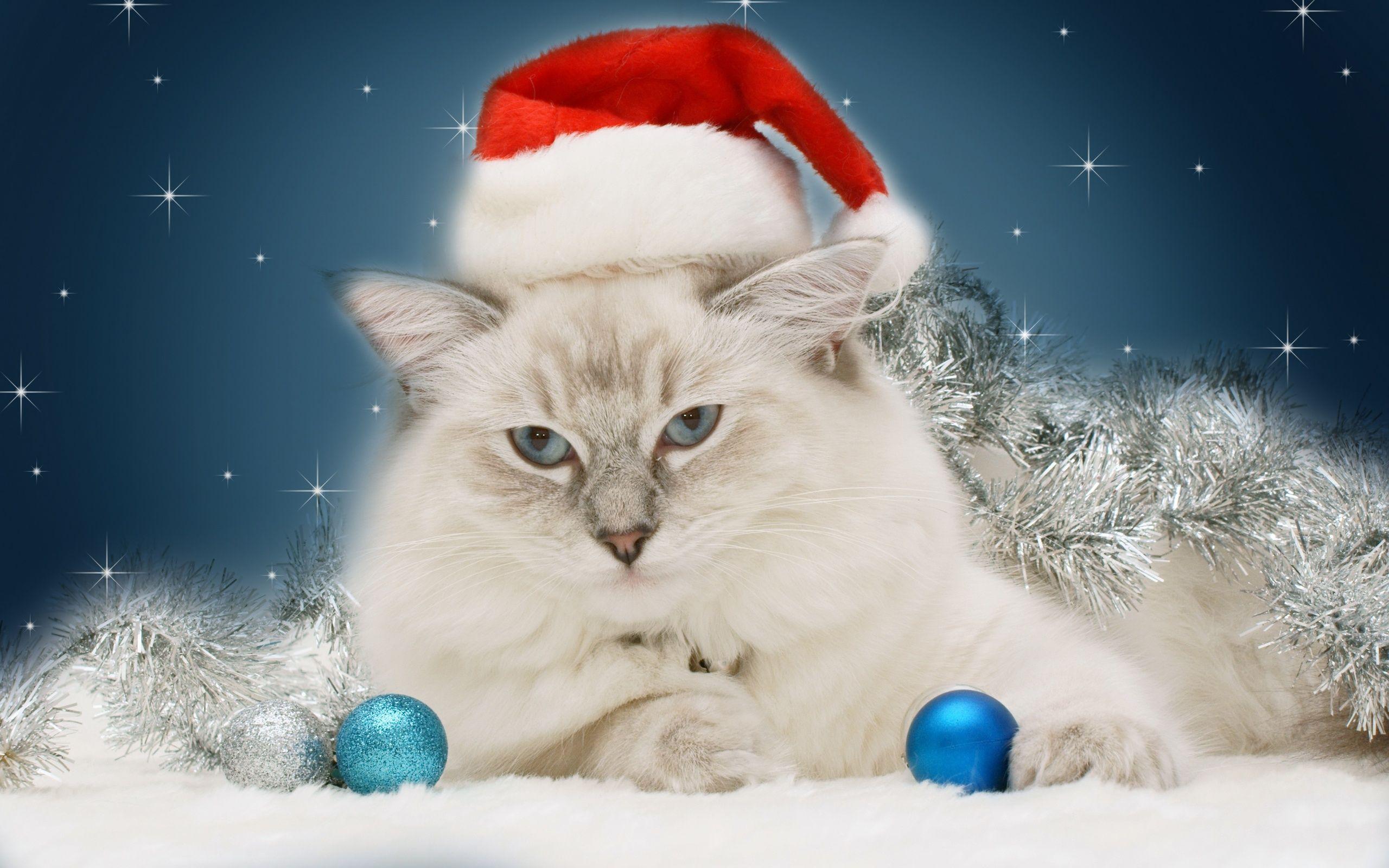 christmas cat wallpaper free bella in her santa hat! | christmas