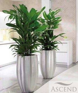 Stunning Office Plant Displays