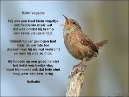 spreuken over vogels gedichten over vogels   Google zoeken | teksten seizoenen   natuur spreuken over vogels