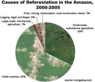 The Amazon Rainforest Deforestation Impact Deforestation