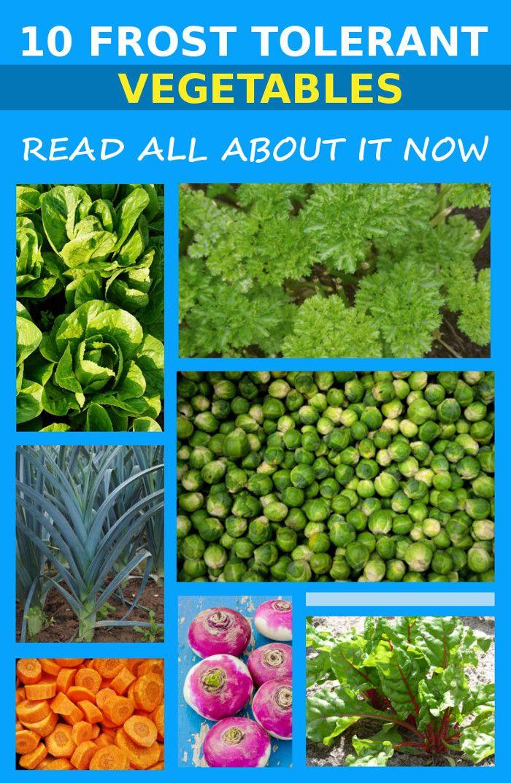 10 Frost Tolerant Vegetables To Grow In Winter Growing 640 x 480