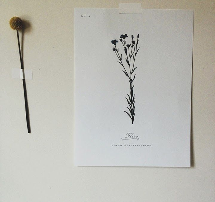 BOTANICAL PRINTS : Fresh & Wood | D - gráfico | Pinterest | Cuadro