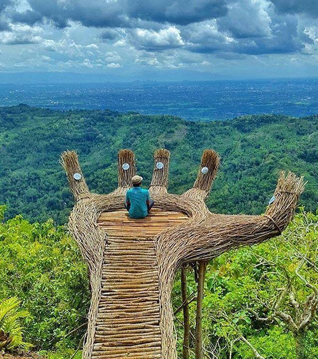 Pinus Pengger, Sendangari, Indonesia Photograph By
