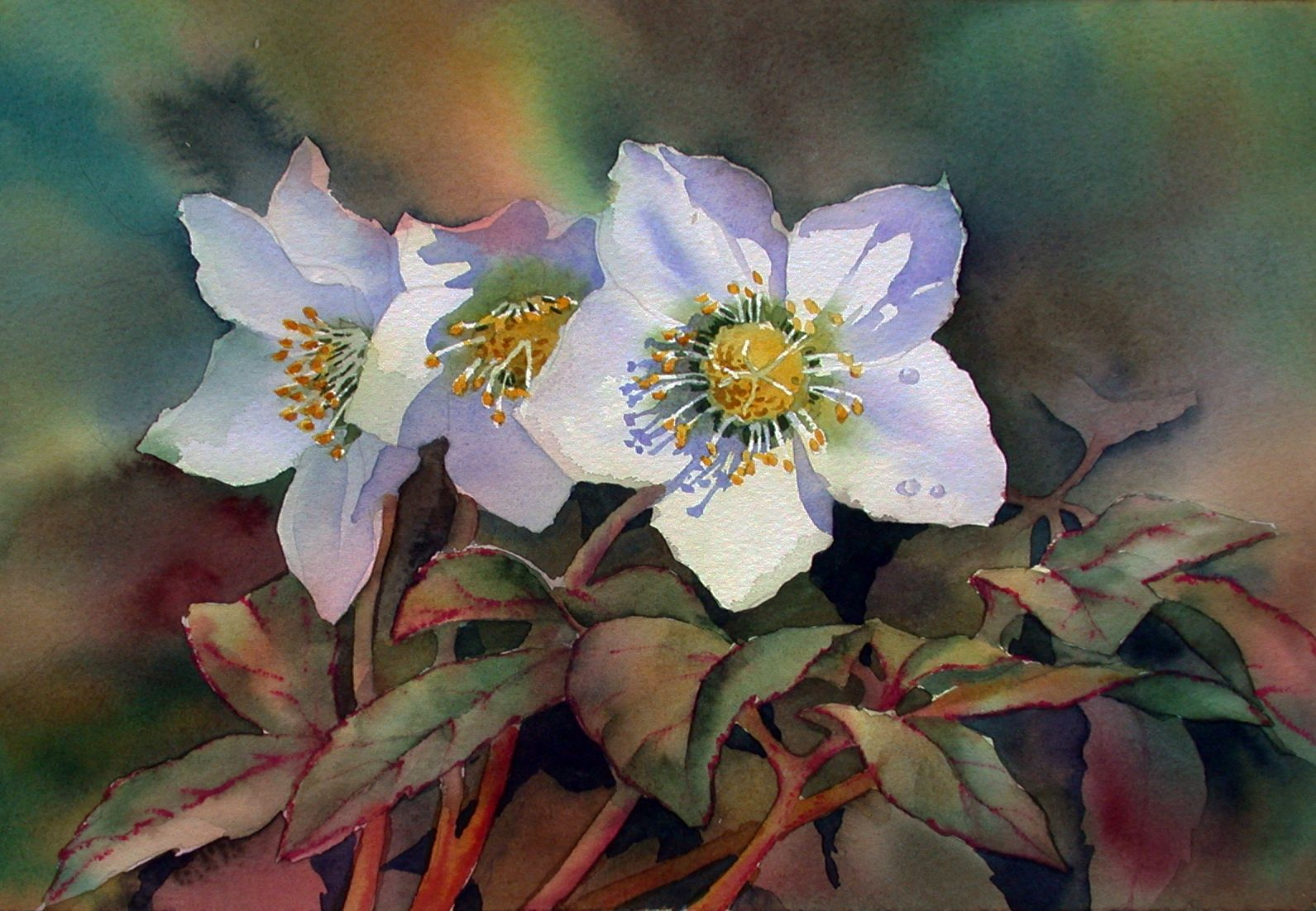 Anns Watercolour Studio Painting Shadows On White Flowers Wc
