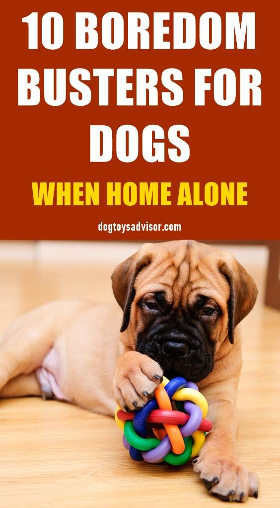 Is Your Dog Bored Here S A List Of At Home Boredom Busters For